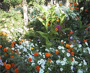 フェネラーリ庭園で咲き乱れる花々
