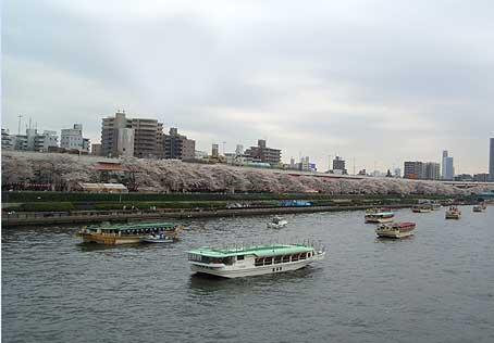 隅田川 岸