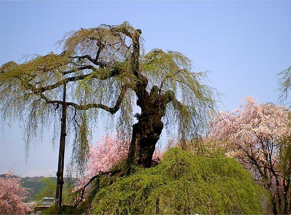 seiunji2009f.jpg