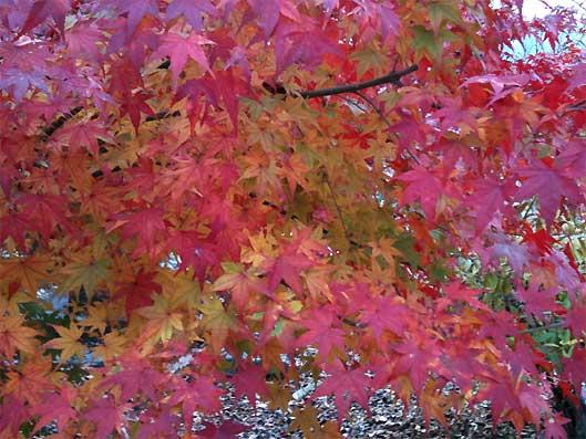 yorii20101127h.jpg