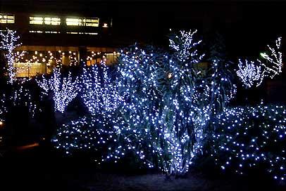 国立西洋美術館外のイルミネーションで飾られた木々