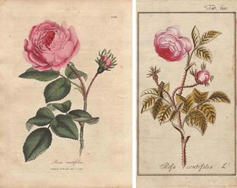 botanical04.jpg