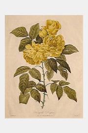 botanical09.jpg