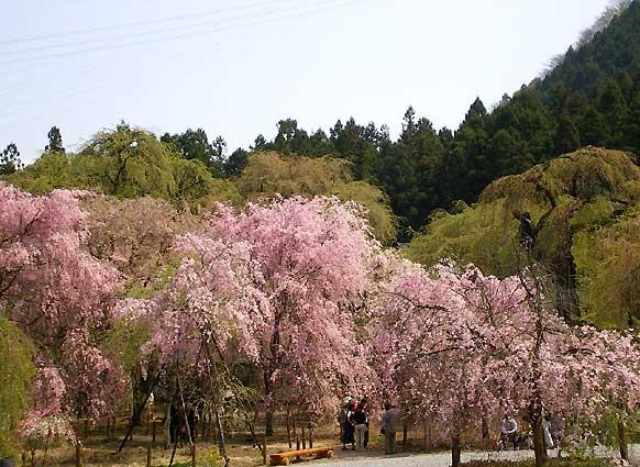 seiunji2009a.jpg