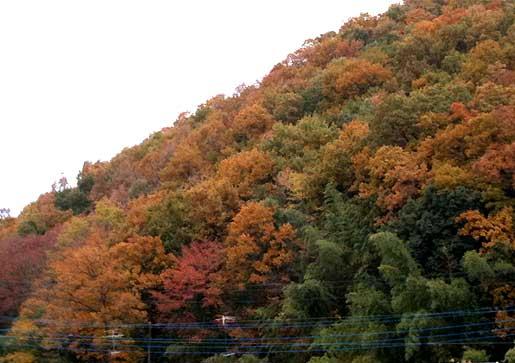 yorii20101127b.jpg